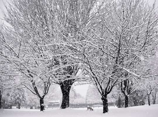 Photograph of a blizzard in Abbotsford, British Columbia