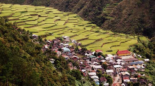 People built these terraces to grow rice, in the Cordillera Mountains, north of Manila in the Philippines. They are one example of how humans have transformed ecologies around the world. (Courtesy S. Ciencia)