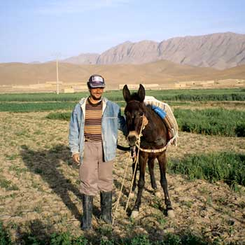 A rural man poses with his donkey near Ziz, Morocco. This area is representative of the Populated Rangelands anthrome: low population, few crops, and flat lands used mainly for livestock grazing. (Courtesy E. Ellis)
