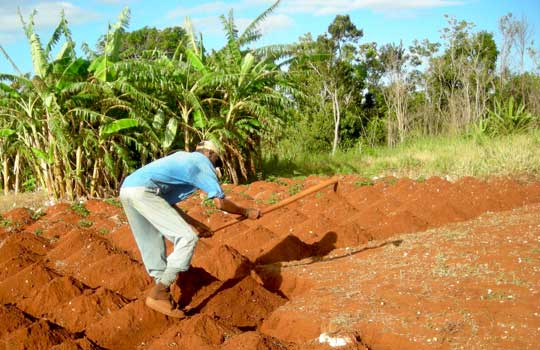 Photograph of a Jamaican farmer hoeing his fields