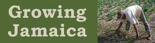 Growing Jamaica - SOP 2011