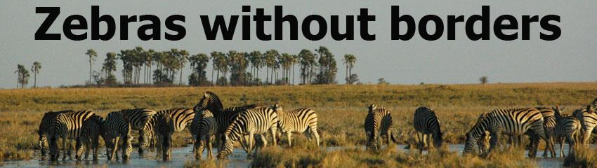 Zebras without borders header