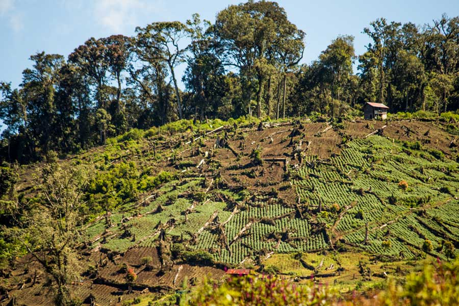 Photograph showing illegally logged area in Kerinci Seblat National Park in Sumatra, Indonesia