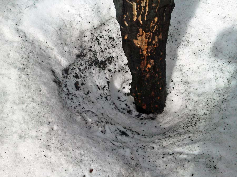 Photograph of charred wood debris on the snow around a snag