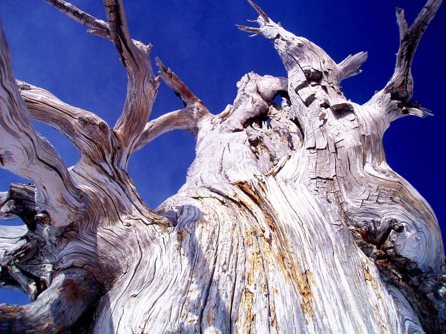 Close-up photograph of a dead tree