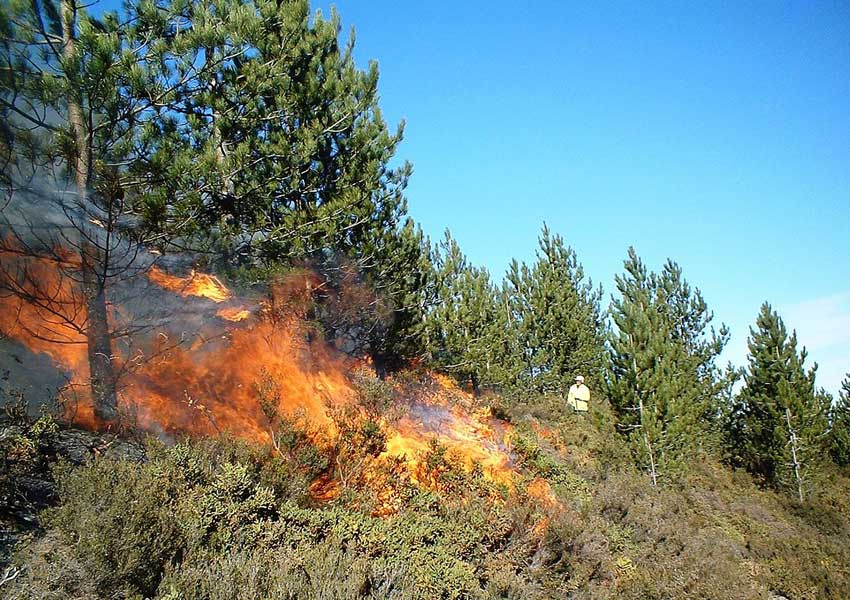 Photograph of a prescribed burn