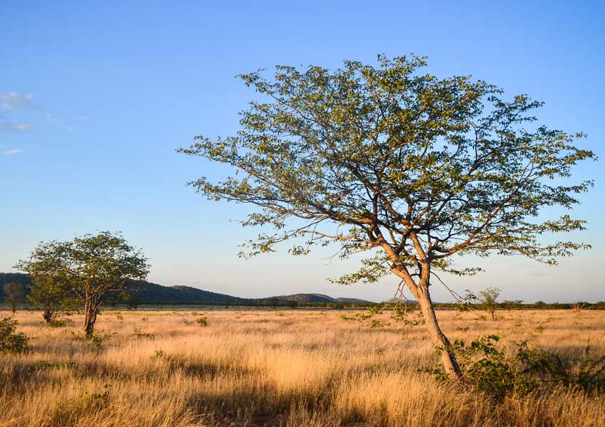 Photograph of a savanna in Namibia