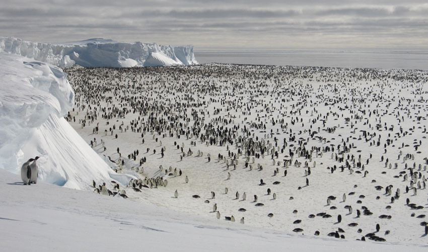 This scene shows a mixture of sea ice types commonly seen in the Southern Ocean. The different thicknesses of sea ice form a spectrum of colors and shapes ranging from dark black open water, a thin grease-like covering called grease ice, and thicker grey ice. Older sea ice has a bright white covering of snow and many chaotic deformation features visible as ridges and rubble fields caused by the continuous motion of the ice pack.