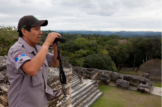 Photograph of Rafael Manzanero watching out for fires from atop a temple at Caracol Archaeological Reserve